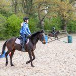 Denevelyn Equine Riding School